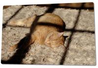 cat-sleeping2.jpg