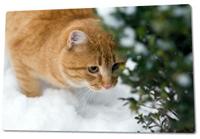 cat-snow2.jpg