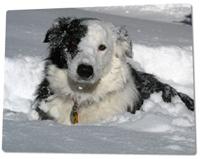 dog-snow2.jpg