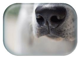 dog_nose
