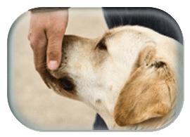 dog_smelling