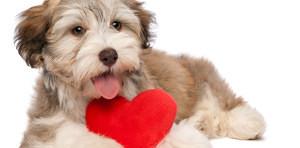 dog_heart_blog