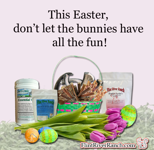 Dont_Let_The_Bunnies_Have_All_The_Fun