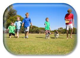 Boys walking a dog