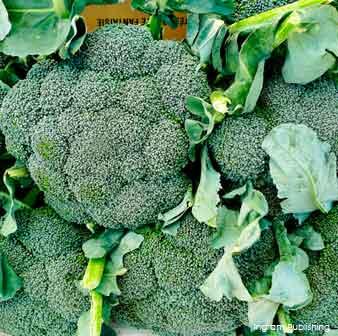 broccoli-superfoods