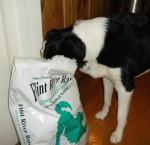 Dog eating Flint River Ranch