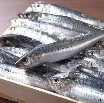 sardines-superfoods
