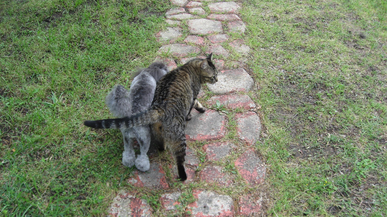 Gigi+cat2
