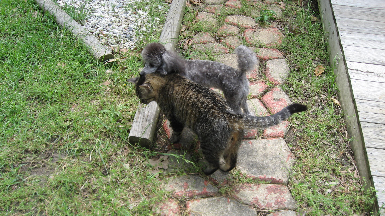 Gigi+cat3
