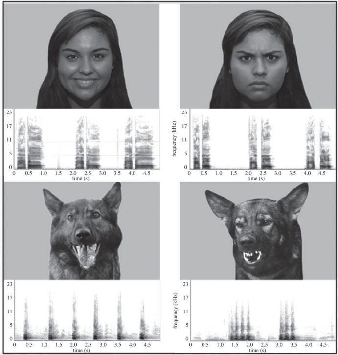 dogs-emotions.JPG.838x0_q80