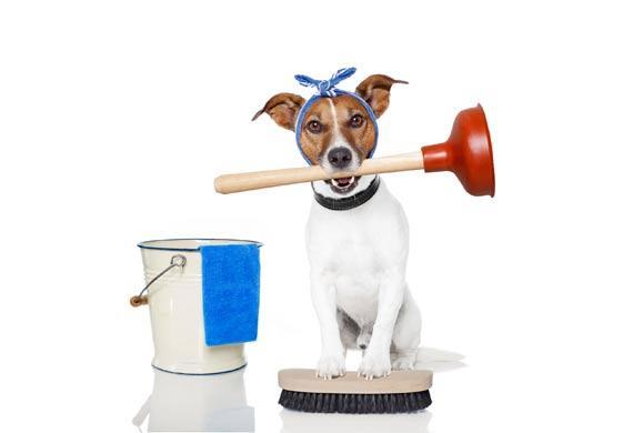 10-vinegar-for-pets-177000122