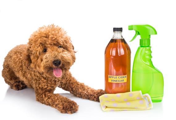 3-vinegar-for-pets-488275630