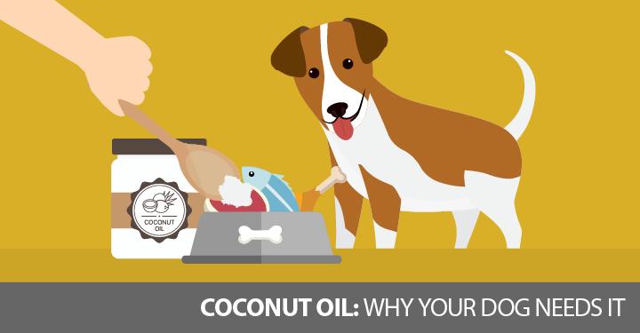 coconut-oil-dnm-1