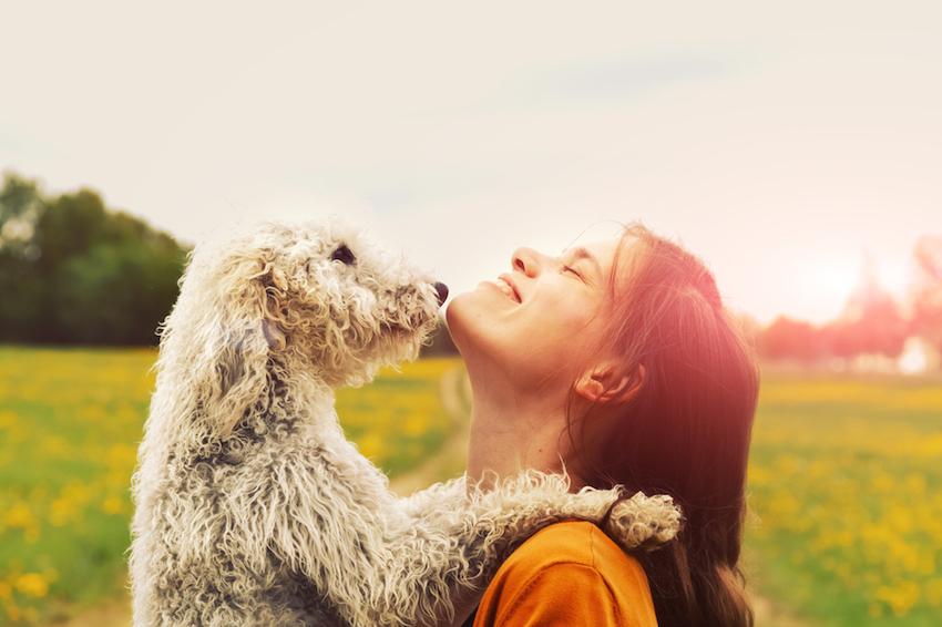 pets-article