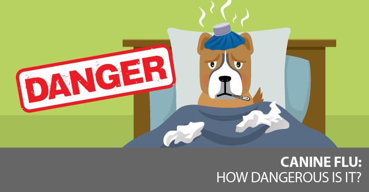 canine-flu-dnm